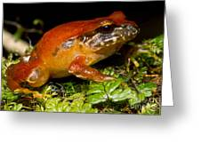 Rosy Ground Frog Greeting Card