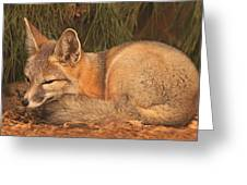 San Joaquin Kit Fox  Greeting Card