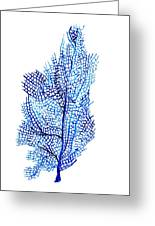 Sea Fan Greeting Card