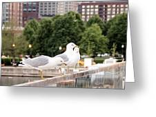 3 Seagulls In A Row Greeting Card