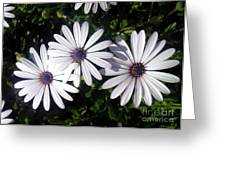 3 Sisters Greeting Card