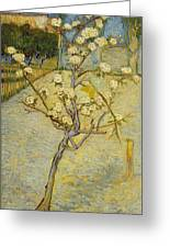 Small Pear Tree In Blossom Greeting Card