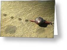 Snail Trail Greeting Card