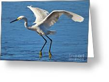Snowy Egret In Flight Greeting Card