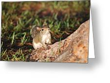 3- Squirrel Greeting Card