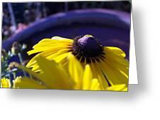 Sun Glory Series Greeting Card