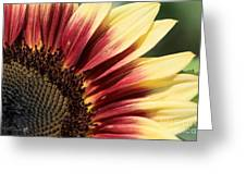 Sunflower Named Ruby Eclipse Greeting Card