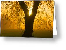Sunrise Trees Fog Greeting Card