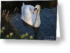 Swan Lake Story Greeting Card
