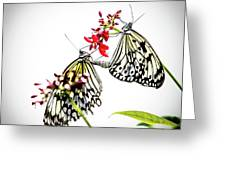 The Extraordinary Rice Paper Butterfly A Series Greeting Card