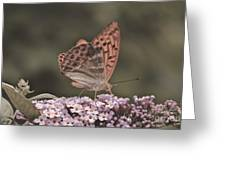 Tramonti Butterfly Greeting Card