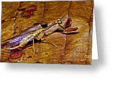 Tropical Mantispid Greeting Card