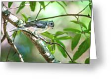 Tufted Titmouse In The Wilds Of South Carolina Greeting Card