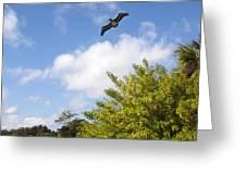 Turkey Creek In Palm Bay Florida Greeting Card
