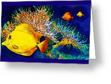 Underwater. Fish. Greeting Card