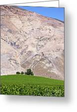 Vines In The Atacama Desert Chile Greeting Card