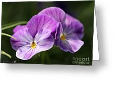 Viola Named Columbine Greeting Card