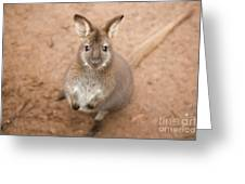 Wallaby Outside By Itself Greeting Card