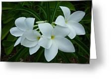 3 White Beauties Greeting Card