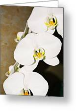3 White Orchids Greeting Card