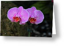 Wild Whispers Greeting Card