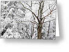 Winter In Monongahela National Forest Greeting Card