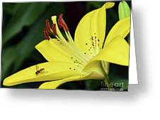 Yellow Lilys Greeting Card