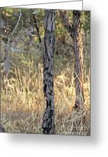 Australian Bush Greeting Card