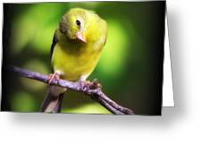 3008 - Goldfinch Greeting Card