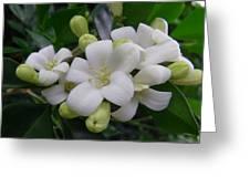 Australia - Gardenia White Flowers Greeting Card