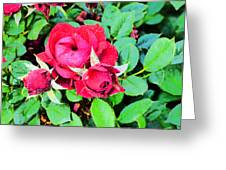 La Vie En Rose  Greeting Card