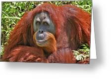 31- Orangutan Greeting Card