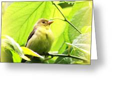 3154 - Tanager Greeting Card