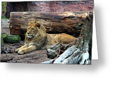 Hannover Zoo Germany Greeting Card