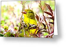 3395 - Tanager Greeting Card