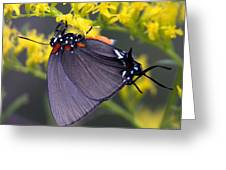 3398 - Butterfly Greeting Card