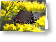3454 - Butterfly Greeting Card