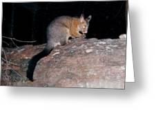 Australian Native Animals Greeting Card