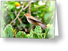 3546 - Tanager Greeting Card