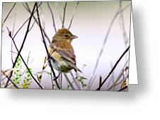3571 - Tanager Greeting Card