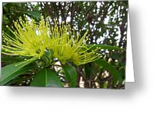 Australia - Pollinating A Green Leionema Flower Greeting Card