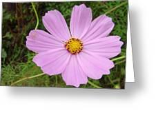Australia - Mauve Flowers Greeting Card
