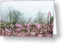 Blossoming Peach Flowers In Spring Greeting Card
