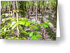 cypress forest and swamp of Congaree National Park in South Caro Greeting Card