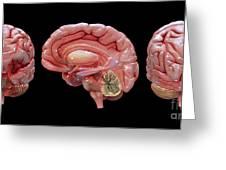 3d Rendering Of Human Brain Greeting Card