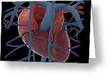 3d Rendering Of Human Heart Greeting Card