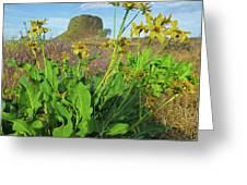 3da5792-dc Arrowleaf Balsamroot Framing Hat Rock Greeting Card