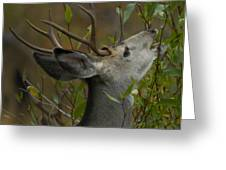 3x3 Buck Mule Deer-signed-#9716 Greeting Card