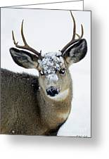 3x3 Mule Deer Buck-signed-#8800 Greeting Card