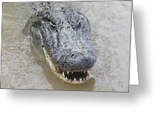Alligator Greeting Card
